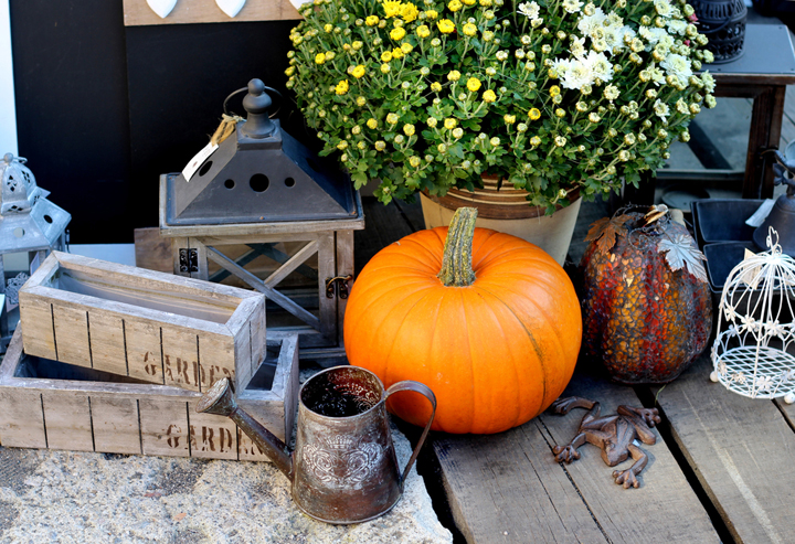 Fall decor with pumpkins, wood and flowers